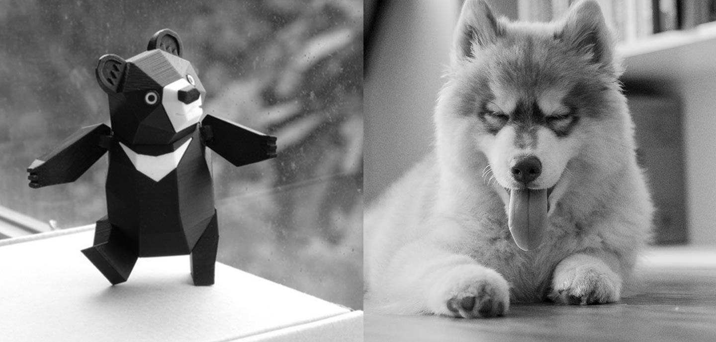 borealitos mascota viajera oso vs husky